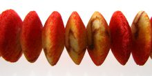 Apple coral rough limestone saucer 15mm wholesale beads