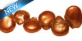 COPPER COIN PEARLS 8-9MM WHOLESALE BEADS