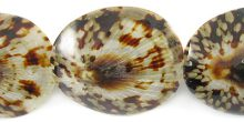 Limpet shell tiger wholesale beads
