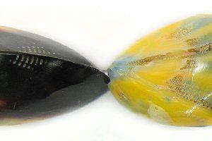 Mactan pearl shell yellow wholesale beads