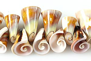 Lisway shell trumpet wholesale beads