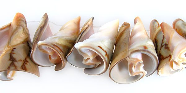 Voluta shell trumpet wholesale beads