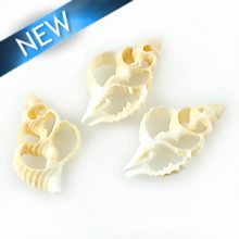 Natural skeleton shells wholesale
