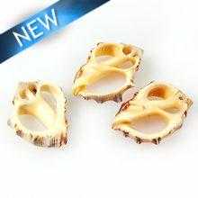 Drupa Skeleton Orange shells 15~31mm wholesale
