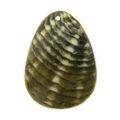 Blacklip teardrop w/ skin wholesale pendant