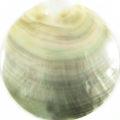 Blacklip 64mm round plain wholesale pendant