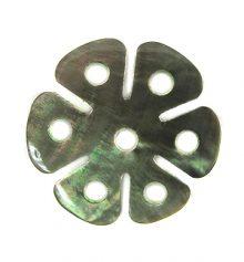 Blacklip 6-petal 30mm flower wholesale