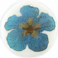 "Metallic Blue ""Gumamela"" Flower Design Round Makabibi"