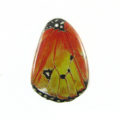 Laminated butterfly print Yellow Orange wholesale