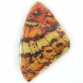 Laminated butterfly paper print Beige