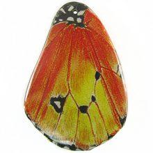 Laminated butterfly print 2 Yellow Orange wholesale