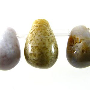 Fossil Coral Briolette beads wholesale gemstones