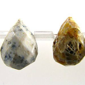 Fossil Coral Briolette faceted 6mm wholesale gemstones