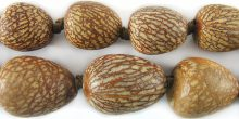 wholesale Bettle Nut Palm Seed 13-21mm